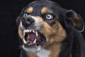 【閲覧注意】おばあちゃんが亡くなった後の、飼ってた犬の行動が怖すぎるんだが…(画像)