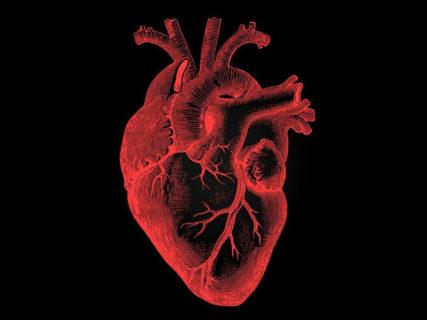 """【超!閲覧注意】生きてる人間から心臓を """"一瞬で抜き取ったら"""" こうなる・・・(動画あり)"""