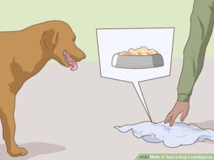 【衝撃動画】犬の知能が「人間の2~3歳レベル」である事がよく分かる映像をご覧ください…