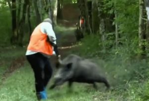 【閲覧注意】イノシシをぶっ殺そうとしたハンター、足とお腹がこうなる(画像あり)