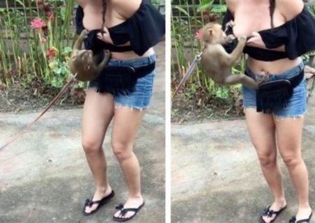 【エロ注意】サル、おっぱいが大きい女の子をポロリさせてしまうwww(動画あり)
