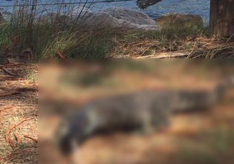【閲覧注意】海で遊んでた子供が血を流して倒れた。砂浜にいたのは「この化け物」だった…(画像)
