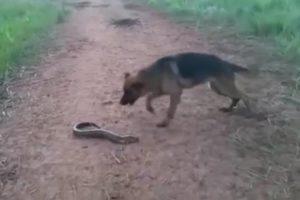 世界中で話題の動画。犬がデンキウナギを噛んだ結果wwwww