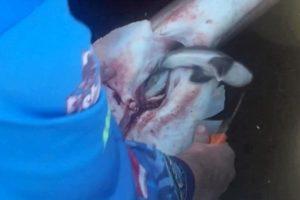 【衝撃映像】漁師がサメのお腹を裂いたら・・・稚魚98匹がどんどん出てくる映像が話題に