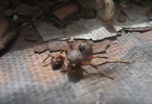 【驚愕】スズメバチの頭を切断して放っておいたら・・・(動画あり)