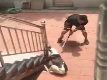 【閲覧注意】隣人が飼ってる犬を殺そうとしてるけど怖すぎて何も言えない(動画あり)