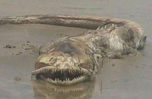 【恐怖】メキシコのビーチに正体不明のクリーチャーが打ち上げられる… これは怖い…(画像)