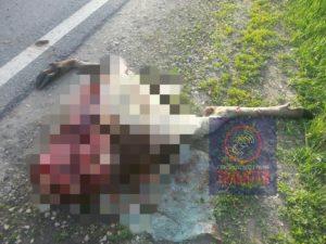 【閲覧注意】時速120kmで鹿と衝突したら、車内はこうなりました…(画像あり)