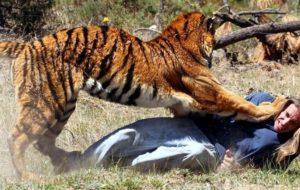 【衝撃映像】ワニ、ヒョウ、ライオン、サメ、クマに襲われたら… 人間がどれだけ弱いかをご覧ください