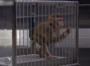 【閲覧注意】檻に入れられた子ザルが・・・昔の動物実験がエゲツなさすぎると話題に