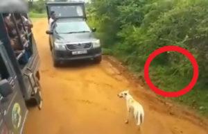 【衝撃映像】アフリカの観光客、ヒョウの縄張りに犬をおびき寄せ大炎上… ⇒ 犬はこうなりました