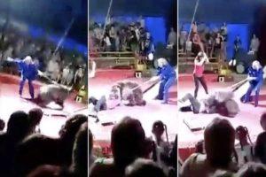 【衝撃映像】ロシアのサーカス団、人間がクマに襲われてる地獄絵図を観客に見せ付ける・・・