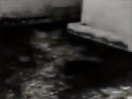 """【閲覧注意】""""女王蟻"""" たった1匹が侵入した建物、とんでもない事になる(動画あり)"""