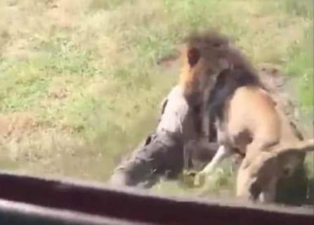 【閲覧注意】動物園で人間が「ライオンの檻」に入った時と「ゾウの檻」に入った時の違い・・・