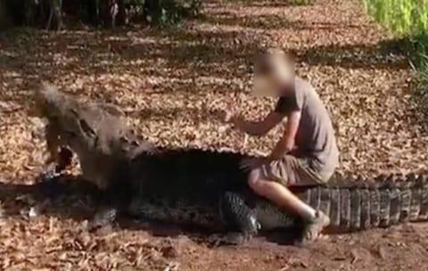 【超狂気】オーストラリアの旅行者が650kgのワニの背中に乗って炎上「殺されなかったのが奇跡」