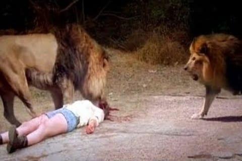 """【超!閲覧注意】ライオンに """"食われる途中"""" だった人間の姿をご覧ください・・・(動画あり)"""