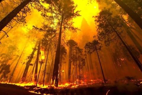 【閲覧注意】山火事直後の山に行ったら、見ちゃいけないものを見てしまった…(動画あり)