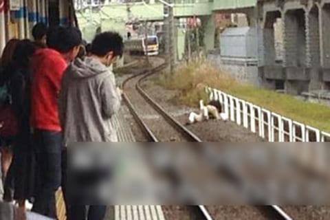 【閲覧注意】駅のホームで落下したホームレスを助けようとした17歳少年の末路(画像)