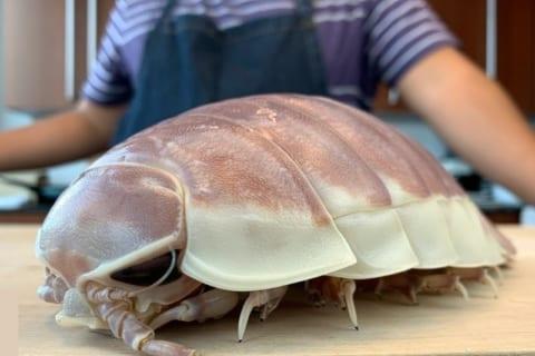 【閲覧注意】日本の料理人による「ダイオウグソクムシ捌いてみた」動画が海外でめちゃくちゃ話題に
