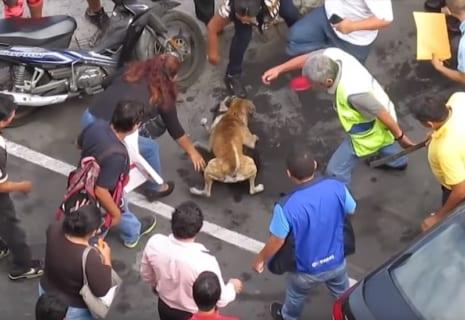 """【衝撃】""""世界で最も恐ろしい犬"""" のヤバさが3分で分かる映像・・・"""