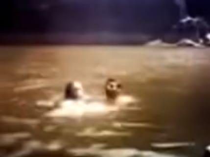 【閲覧注意】新婚旅行中のカップルが底なし池に沈んでいき絶命。伝説の動画