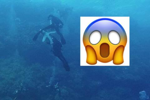 【超恐怖】海中で観光客がサメに襲われ海が血に染まる映像。あまりにも怖すぎる