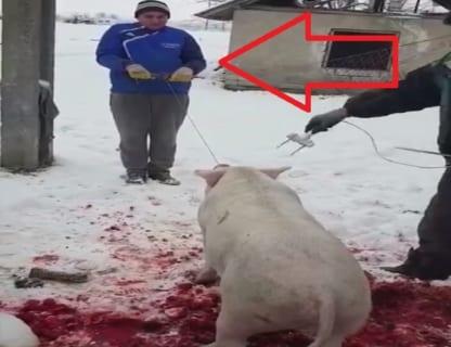 【衝撃映像】今から豚が殺されるんだが、その後ろにいるオジサンにも恐ろしい事が起こります・・・