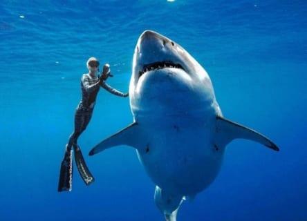 【超恐怖】ハワイで世界最大のホオジロザメが発見される!その大きさなんと…(動画あり)