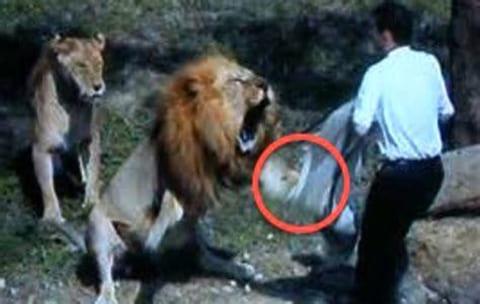【超恐怖】インドの動物園でライオンに食い殺された男性の映像が流出。あまりにも怖すぎる