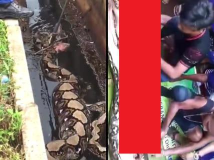【閲覧注意】体長10mの超巨大ニシキヘビに呑み込まれた女性が取り出される ⇒ その姿が…