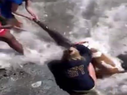 【閲覧注意】砂浜で犬を散歩してたら、海に飛び込み断末魔・・・こうなってた(動画あり)