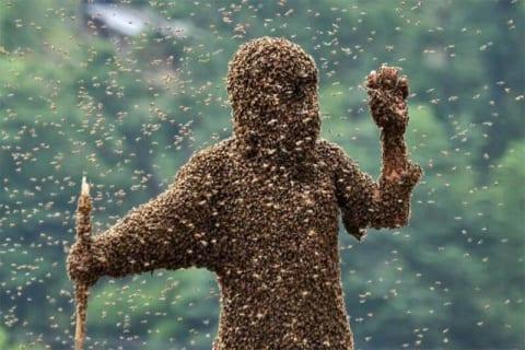 """【閲覧注意】""""蜂毒アレルギー"""" の人が大量のミツバチに刺された結果・・・(衝撃動画)"""