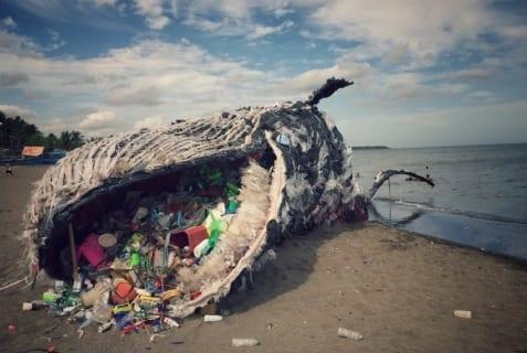 【衝撃】砂浜で死亡したクジラのお腹を切り開いたら、中にとんでもないものが・・・