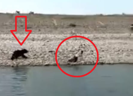 【衝撃】野生のクマに人間が重傷を負わされてる映像なんて初めて見た