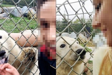 【閲覧注意】インスタ女子、動物園でクマと自撮りしようとしこうなる・・・(画像あり)