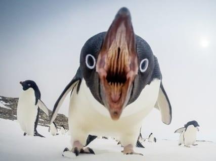 鳥の口の中が思ってるよりずっと怖い(15枚)