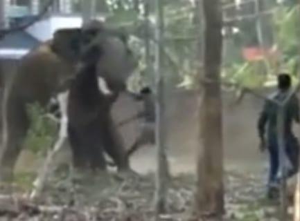 【超衝撃】ゾウはこんな風に人を殺す。こうなったらもう絶対に助ける事はできない