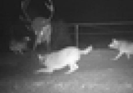 """チェルノブイリの立入禁止区域に """"動きを感知したら撮影される"""" カメラ仕掛けた結果…(画像)"""