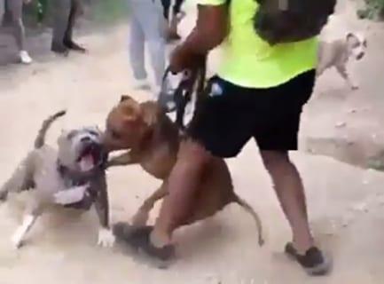 """【悲報】""""世界で最も危険な犬種""""「本当は危険じゃない!」イベント、案の定こうなる…"""