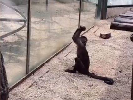 """【驚愕】""""人間の次に頭が良い生物"""" を動物園に閉じ込めた結果・・・(動画あり)"""