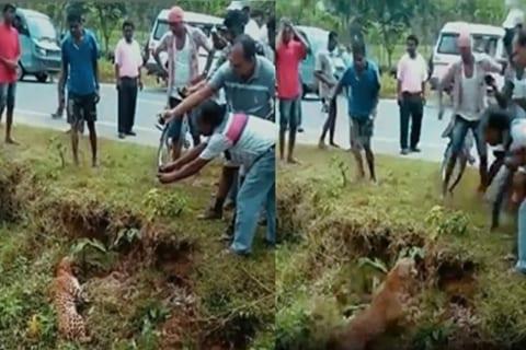 【衝撃】インド人「ヒョウを殺したのでみんなで撮影!」 ⇒ 実はまだ生きていて…