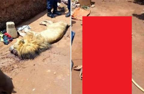 【速報】動物園で14歳の少年がライオンに襲われ死亡!画像が恐ろしすぎる【閲覧注意】