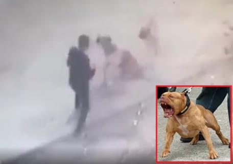 【衝撃】世界で最も狂暴な犬 vs. キックボクサーの夢の戦い ⇒ 勝ったのは・・・