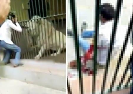 【閲覧注意】動物園でライオンの檻に手を入れたバカはこうなります…(動画あり)