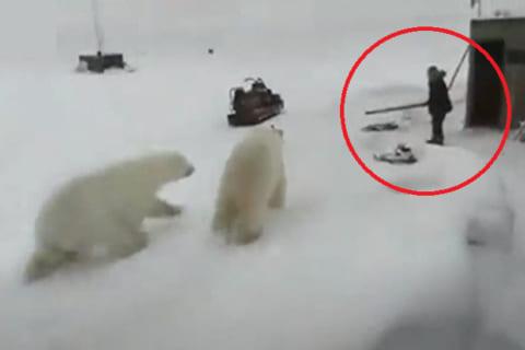 世界中で話題の動画。シロクマ2頭に襲われた男性…この後どうなる?