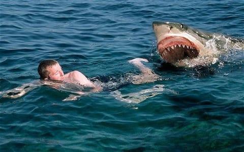 【閲覧注意】海外のビーチでサメに襲われた男性が救出されるも、その姿にビーチが大パニック