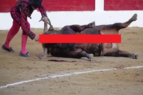 【閲覧注意】闘牛の終わり方、エグすぎる(動画あり)