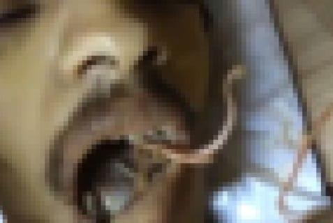 【超!閲覧注意】寄生虫に支配された人間が死んだら…穴という穴から…(動画あり)