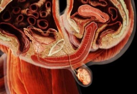 【動画】MRIで男女がセ○クスしてる所を見たら凄い事になってた