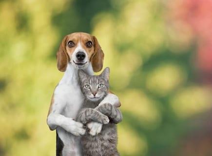 【狂気】犬と猫が交尾した結果・・・これは怖い・・・(動画)